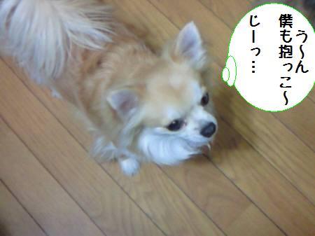 コタ君090203_1