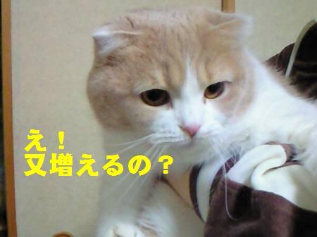 千葉県K様_081109_1a