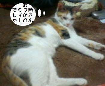 ミィーちゃん090207