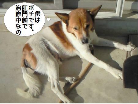ぽち_090209_1