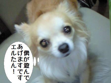 コタ君090211_1