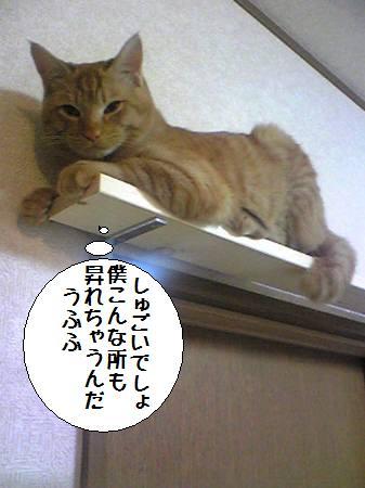 太郎090222_1a