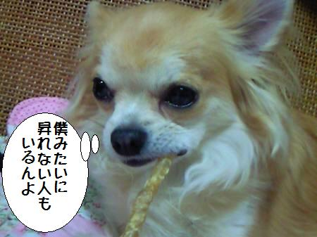 コタ君090225_3