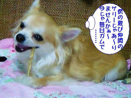 コタ君090302_1