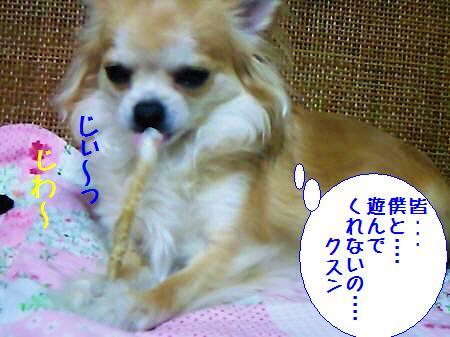コタ君090302_2
