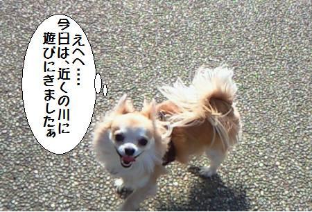 コタ君090329_1