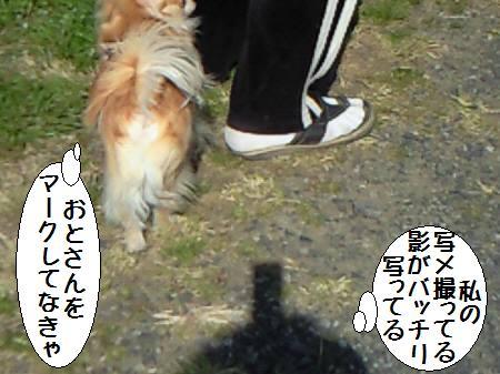 コタ君090329_3