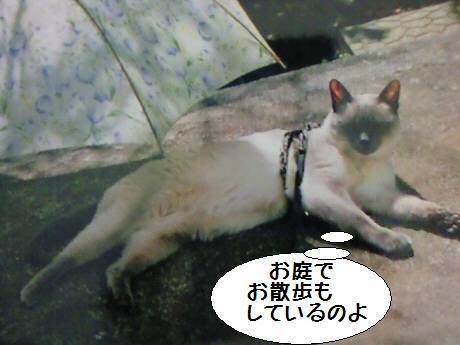 モコちゃん2