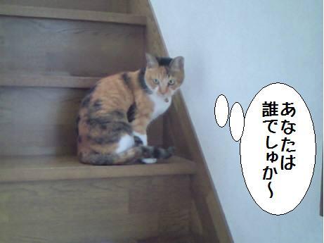 ナナちゃん_あずき_千葉県