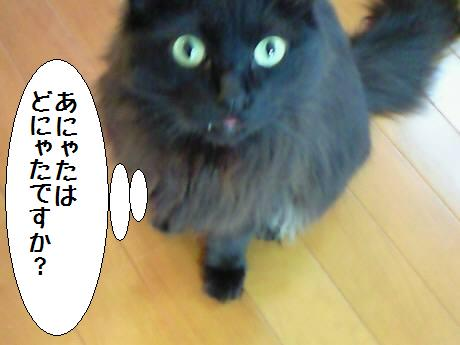 コウちゃん090516