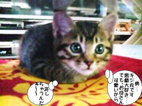 キジ丸_090609