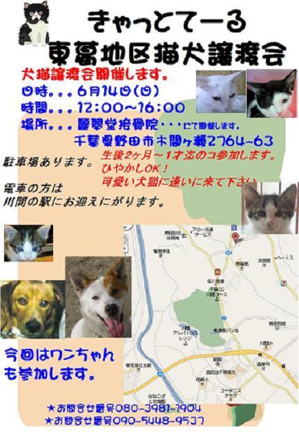 譲渡会0906野田abc
