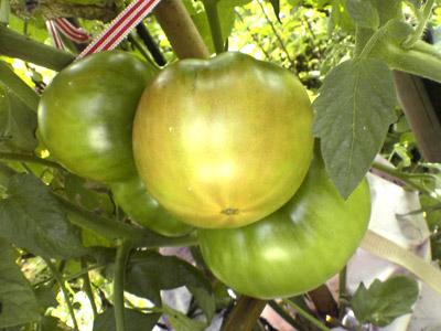 トマト_2