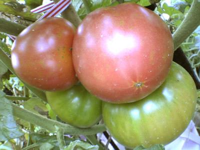 トマト_4