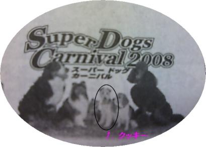 dog2008
