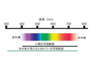 960KL4.jpg