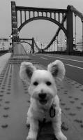 メイベルと清洲橋
