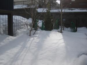 2010-03-19 006