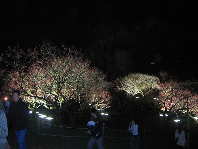 2010,05,15平岡梅林公園 013