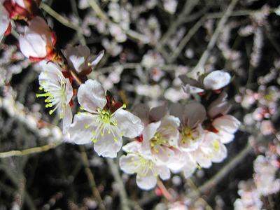 2010,05,15平岡梅林公園 008