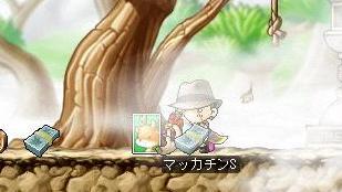 Maple8239a.jpg
