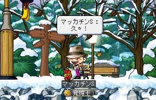 Maple8764a.jpg