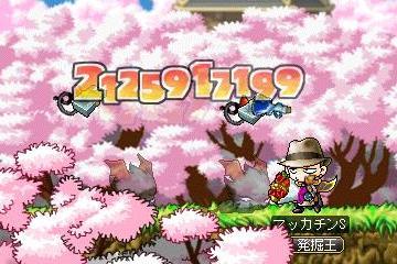 Maple8802a.jpg