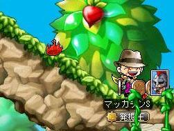 Maple8839a.jpg