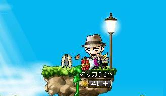 Maple8867a.jpg