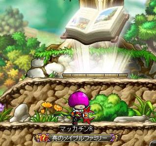 Maple8892a.jpg