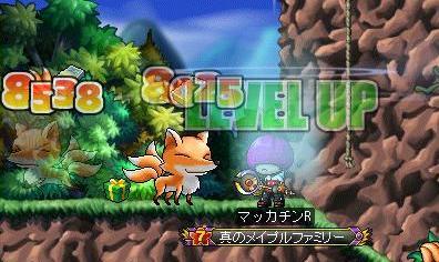 Maple8925a.jpg