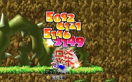 Maple8936a.jpg
