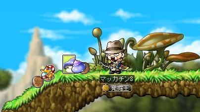 Maple8951a.jpg