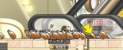 Maple8968a.jpg