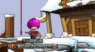 Maple8999a.jpg