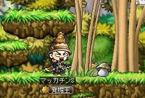 Maple9196a.jpg