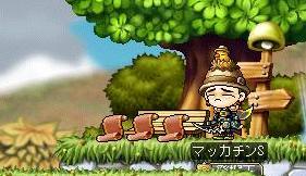 Maple9205a.jpg
