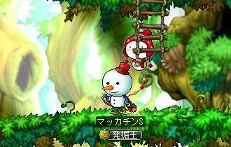 Maple9211a.jpg