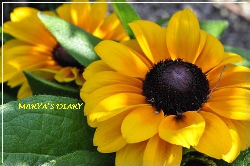 010_20110628154349.jpg