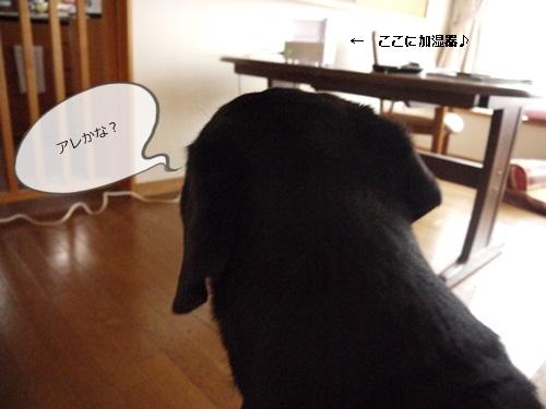 028_20111103134843.jpg