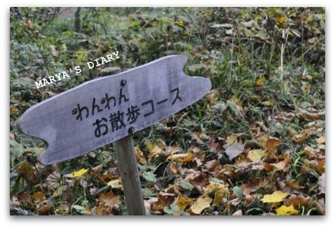_DSC4269.jpg