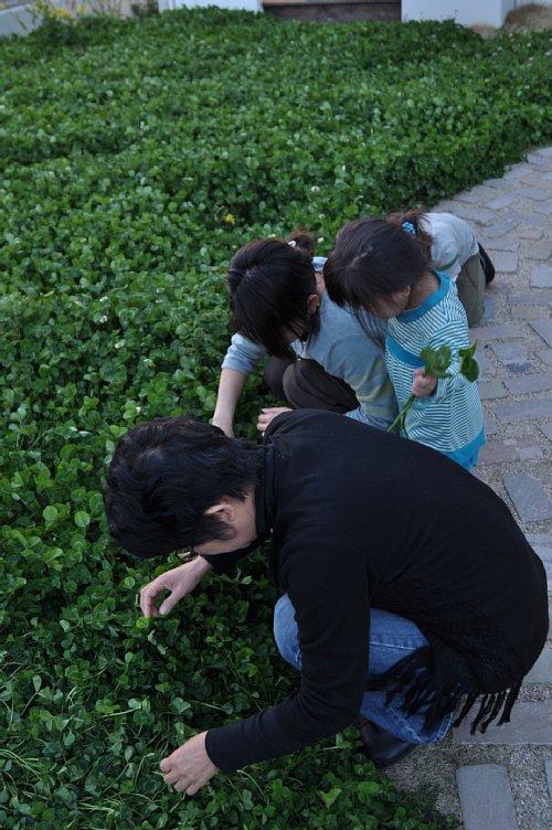 風ノウタの2009春2