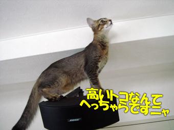 060830_04.jpg
