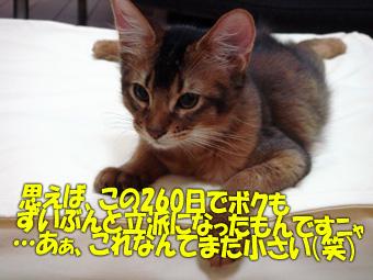 061117_02.jpg