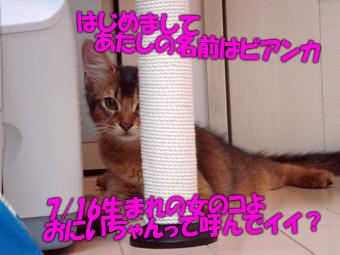061117_05.jpg