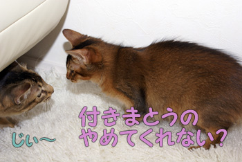 DB_20061122_03.jpg