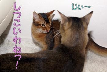 DB_20061122_04.jpg