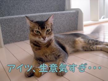 DB_20061124_01.jpg