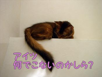 DB_20061126_01.jpg