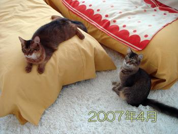 DB_20070605_09.jpg